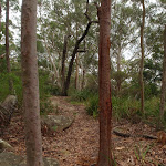 Along the ridge on Graves Walk (227131)