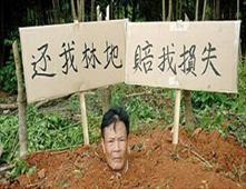 دفن نفسه.. احتجاجاً على اقتلاع أشجاره