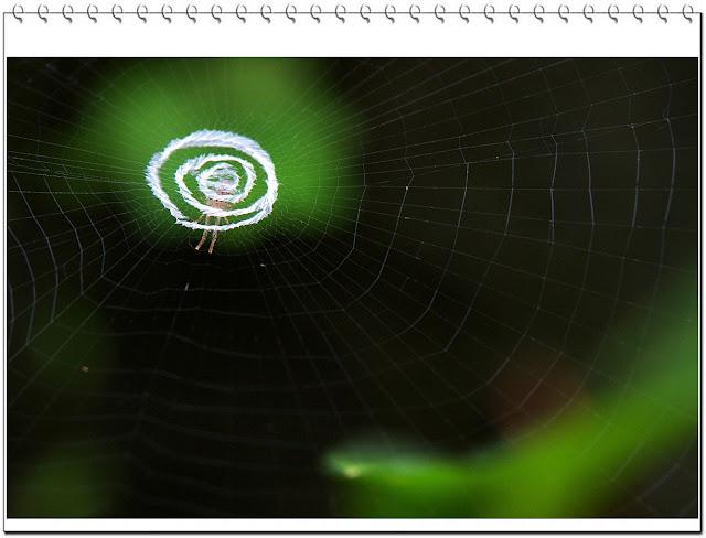 蝶舞蛛網花綠空間
