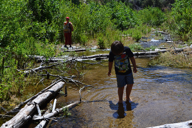 wading in the creek
