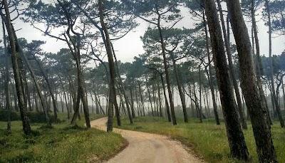 Praia do Samouco