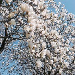 Poet Flowery Prose