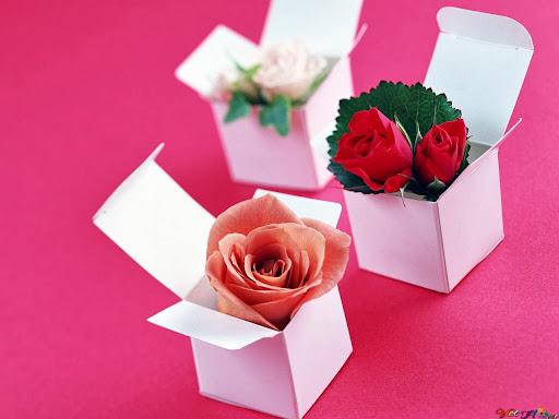 Những hộp nhỏ chứa hoa hồng siêu lãng mạn