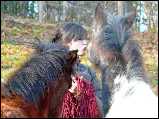 """""""NokotaSpirit"""", l'élevage...Des nouvelles ! - Page 4 Becco"""