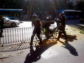 De cómo arreglar una bicicleta utilizando una falsa acacia  (o de los peligros que acechan a un ciclista urbano)
