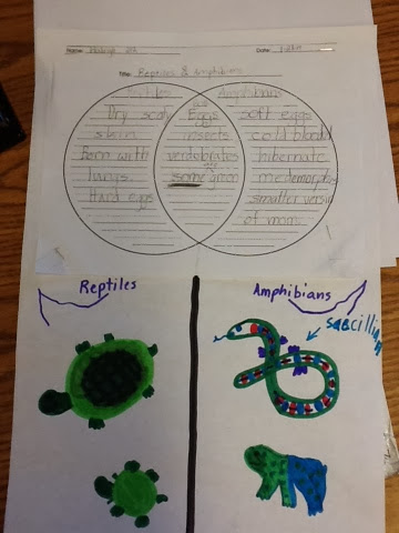 Mrs Bouchers Class Venn Diagrams