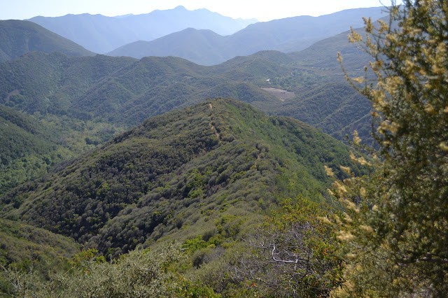 along the backbone of the ridge