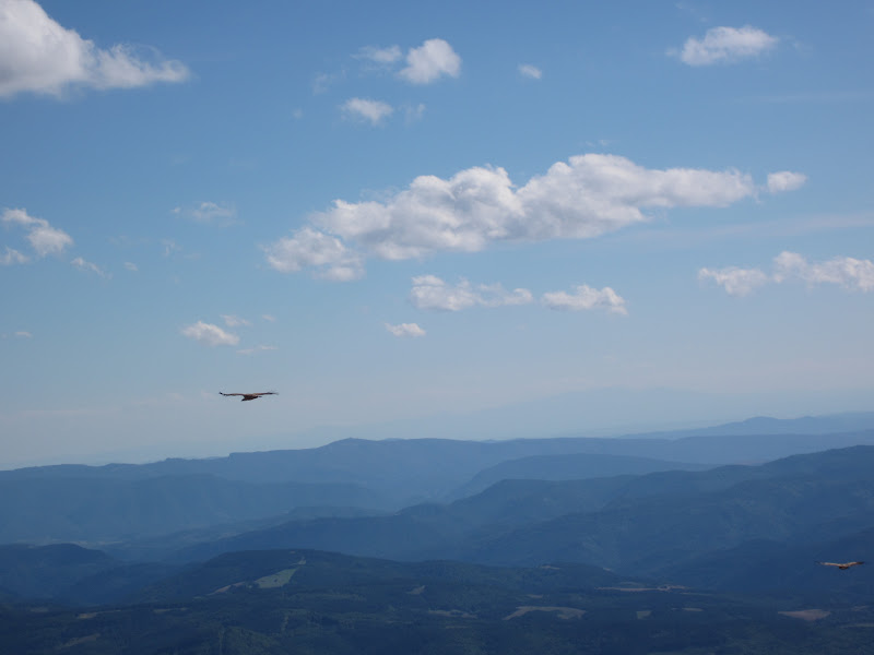 vautours à l'Orhy