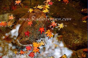 Bên mùa cây lá đổ