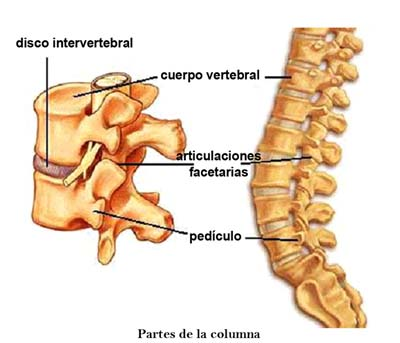 El dolor en el campo del esternón del cuello del hombro