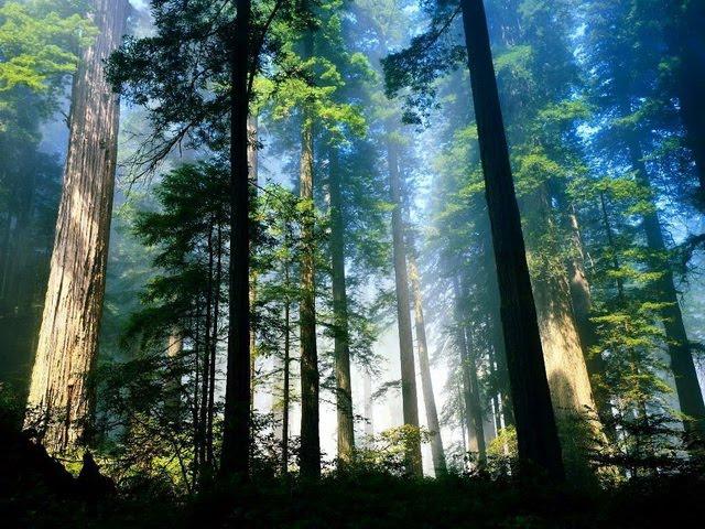 hutan wisata sreni indah
