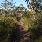 Track between Girrakool and Piles Creek (177576)
