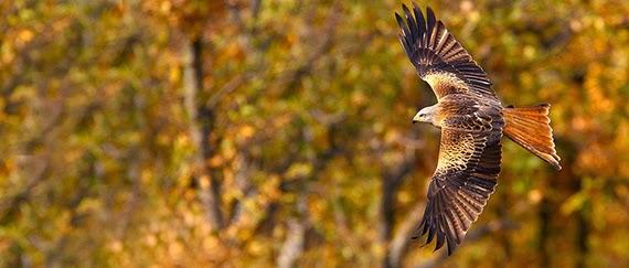 slides ornitologia 01 Sendas ornitológicas...