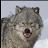 Ck p avatar image