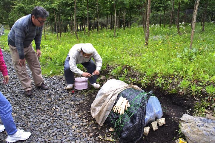 安渡復興米の苗床