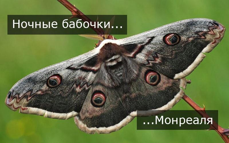 gostinitse-vzrosloy-vizval-nochnuyu-babochku-smotret-onlayn