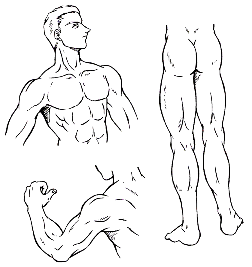 Blog Jose Petri Desenhando Um Personagem Masculino Musculos