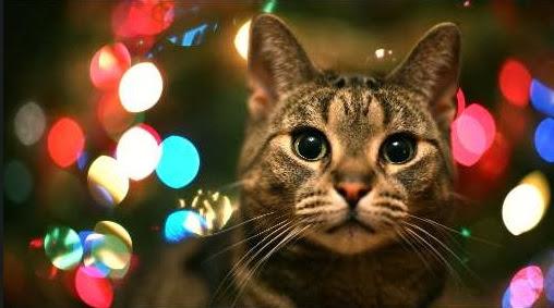 Sfondi di Natale gatto