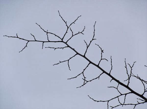 красивая ветвь