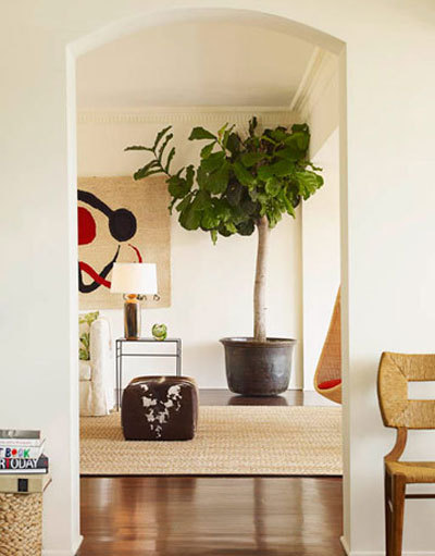 fiddle leaf fig care instructions