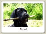 Erold