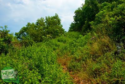 jalan setapak yang ditumbuhi semak-semak menuju ke pantai ngunggah, gunungkidul di tahun 2014