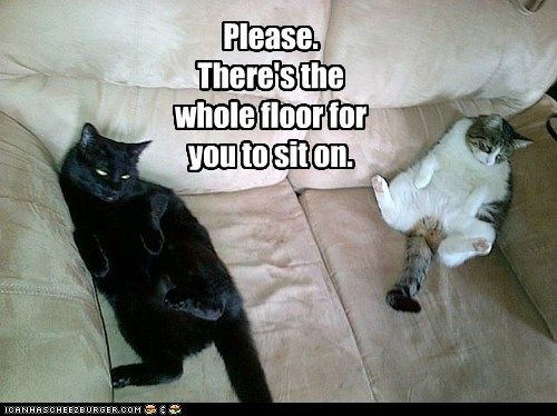 photo of to cats on a couch thinking, there's room on the floor for you to sit