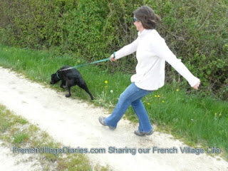 French Village Diaries Diet Doggy easy weight loss fitness programme