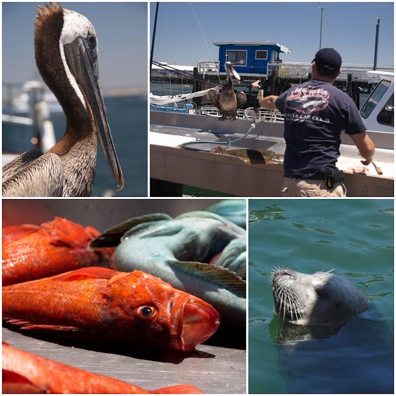 Monterey Bay: Fisherman's Wharf