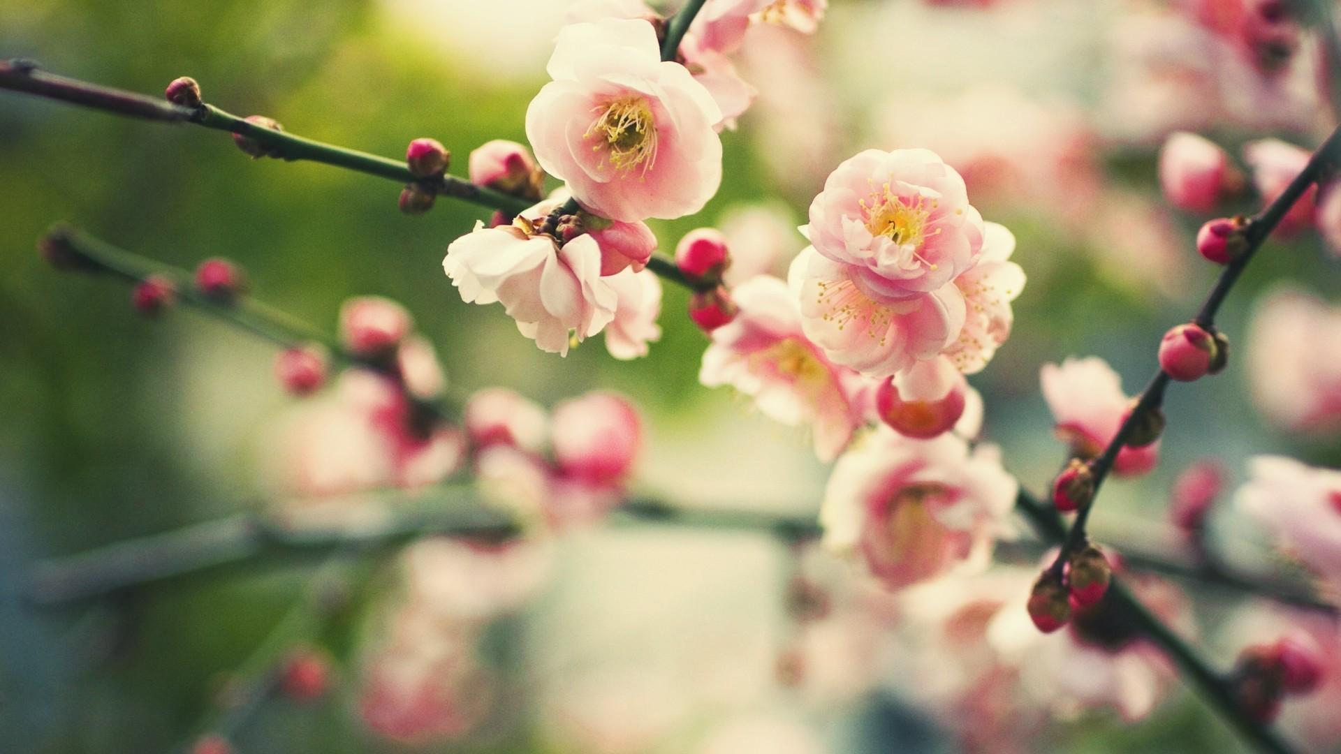 Rüyada Bahar çiçeklerı görmek