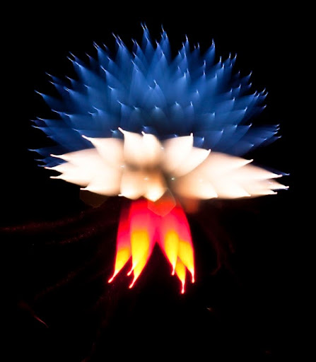 Pháo hoa nổ tung thành những hình ảnh kỳ lạ – độc đáo