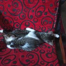 Paola Arrieta