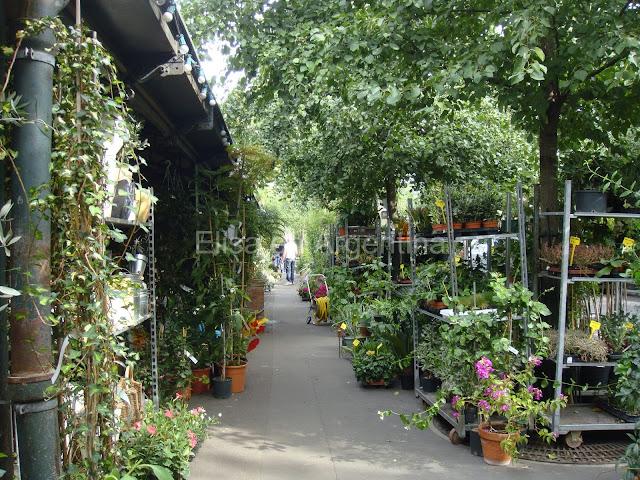 Mercado de Flores, Ile de la Cité, París, Elisa N, Blog de Viajes, Lifestyle, Travel