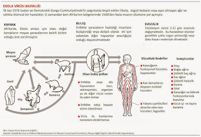 ebola virüsü hastalığı