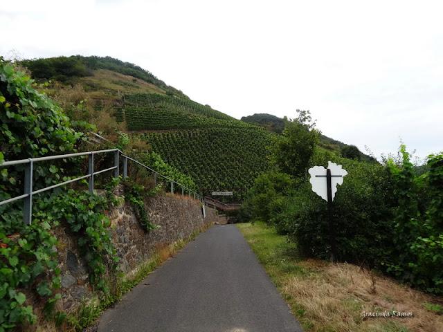 passeando - Passeando pela Suíça - 2012 - Página 21 DSC08558