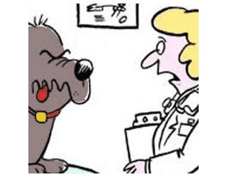 Os riscos de se medicar os animais sem o acompanhamento de um médico veterinário