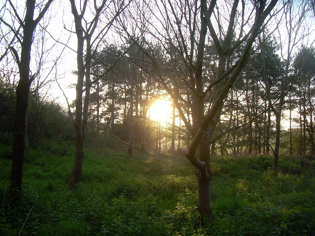 Sunrise in Owl Wood
