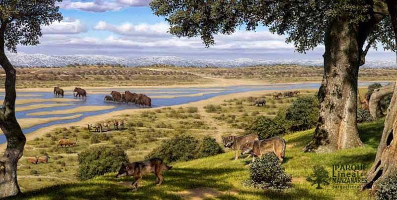 Reconstrucción del paisaje del río Manzanares a su paso por VillaVerde Bajo durante una glaciación cuaternaria. Museo de los Orígenes. Las cuencas bajas de los ríos Manzanares y Jarama son la capital de la prehistoria madrileña, un privilegio contemplar su paisaje.