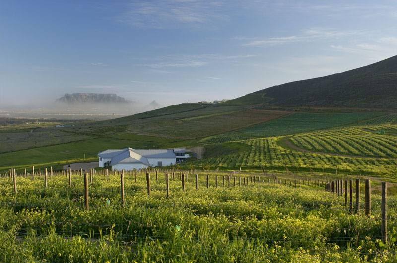 Main image of Capaia Wines (Pty) Ltd