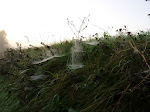 Noch mehr Spinnweben