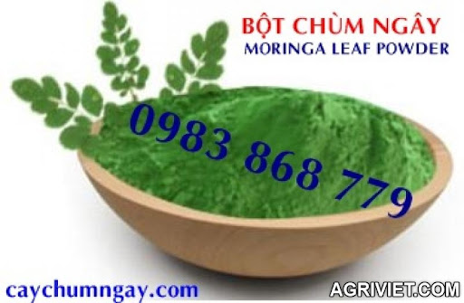 Agriviet.Com-bot_chum_ngay_moringa_powder_1.JPG