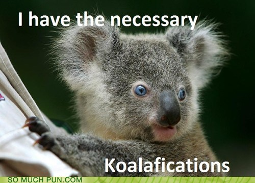 photo of a Koala bear...I have the koalafications for this job