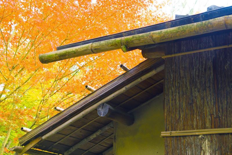 京都 紅葉 高台寺 写真1