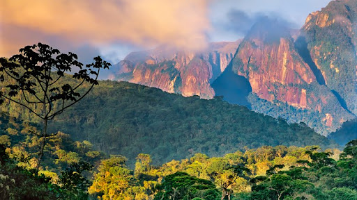 Atlantic Rainforest, Organ Mountains, Serra dos Orgaos National Park, Brazil.jpg