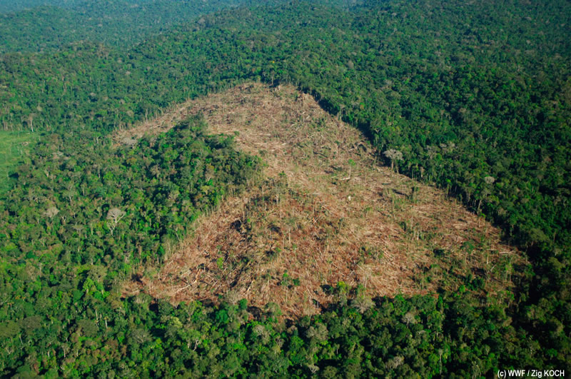 short article on dangers of deforestation What are the causes and effects of deforestation what is global warming how is it linked to deforestation let us find out.
