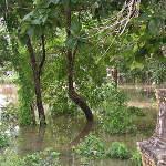 Flooding in Wat Pa