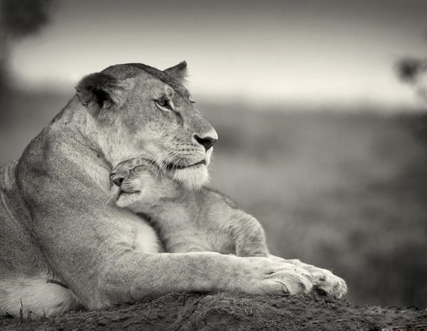 Nice Pictures of Baby Animals and Their Mothers 14