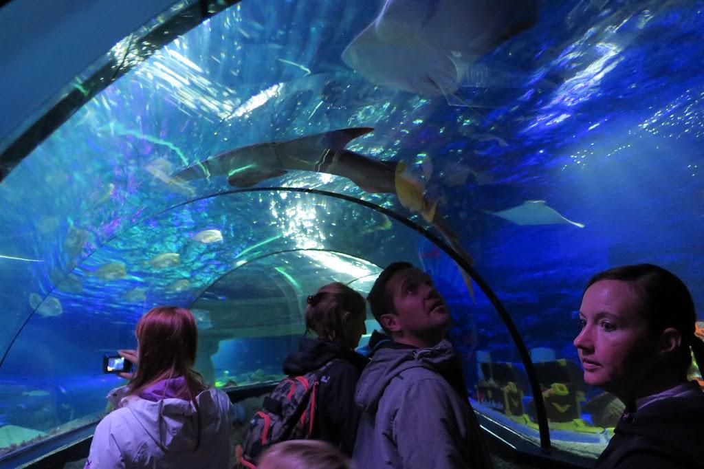 Dichtes Gedränge herrscht im Tunnel durch das Aquarium