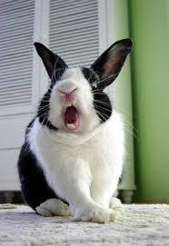 ผลการค้นหารูปภาพสำหรับ กระต่ายก้าวร้าว