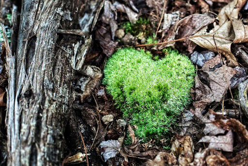 Some forest love…